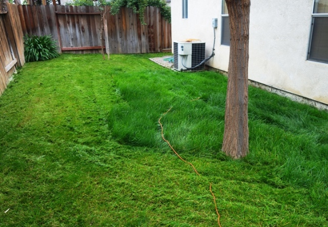 Mowing, Winter, Green Grass, California winter, Tall grass