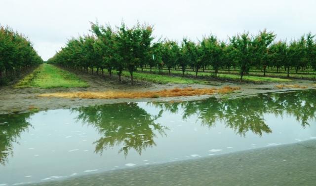 Large Puddle, Rain Puddles, Flooding, orchards