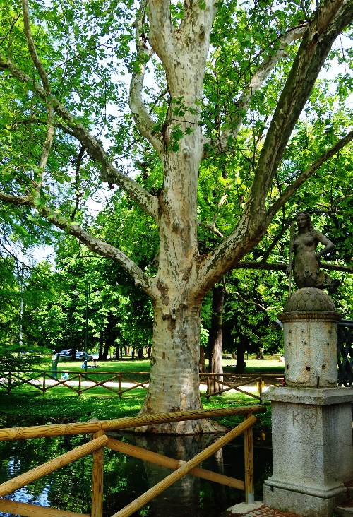 Majestic Tree, Sempione Park, Milan, City Park, Then and Now