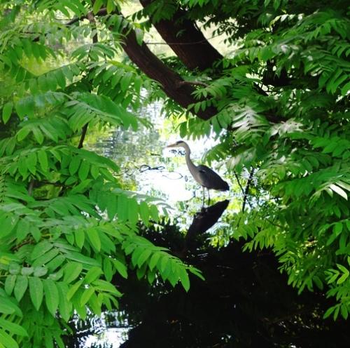 Sempione Park, Water, Pond, Bird, Milan