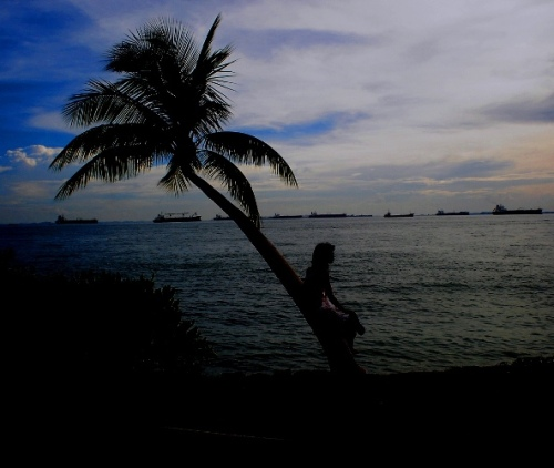 silhouettes, Singapore, beach, palm tree, sunset