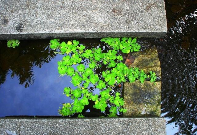Singapore, Haw Par Villa, lily pads, reflections