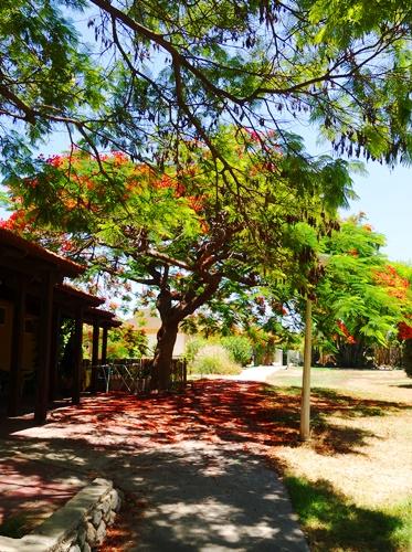 Kubitz, Beautiful Grounds, trees, colorful trees