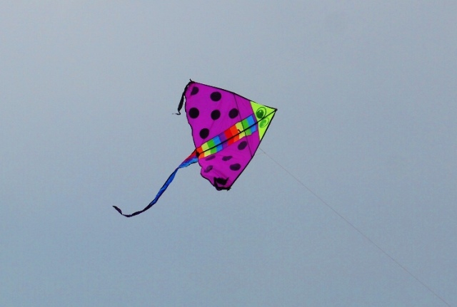 Kite Flying, Singapore, Pink Kite, polka dots