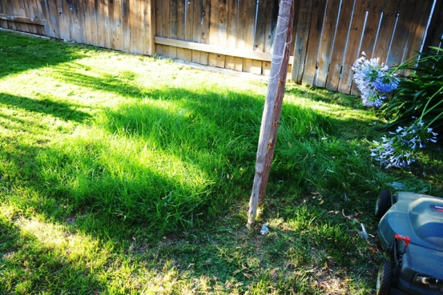Mowing the Yard, Tall Grass, Mower Down, Broken Mower, electric Mower