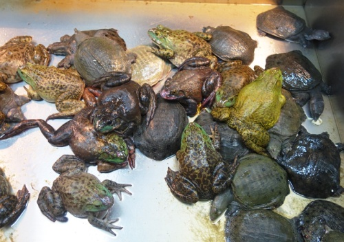 Turtles and Frogs, Chinese Grocer, Uncommon foods, Frog Legs, Turtle Soup