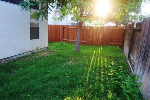Back Yard, Yard Work, Mowing, Overgrown Yard, Time to Mow