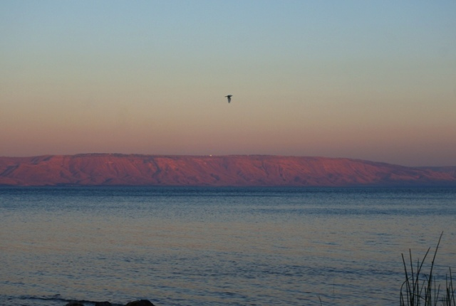 Bird Flying, Galilee, Sea of Galilee, Galilee Hills, Sunset