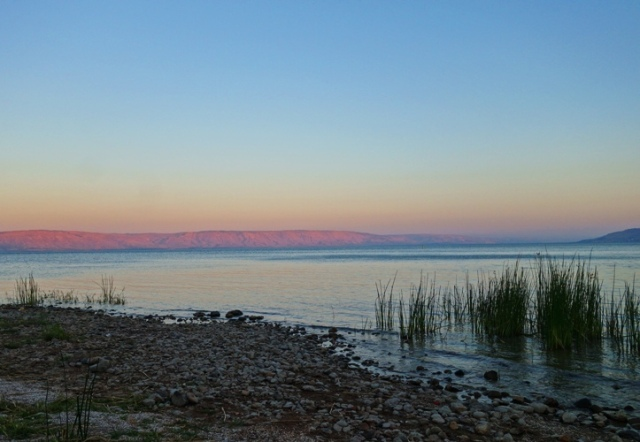 Galilee Sea, Sea of Galilee, Shore of Galilee, Reeds