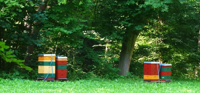 Bee Hives, Germany, Thuringia, Woods, Nature Reserve