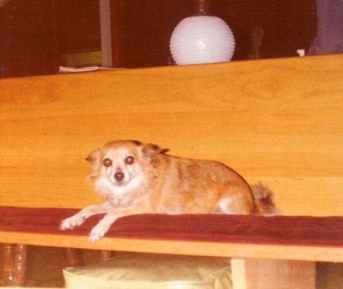 My dog pat, national dog day, my pet