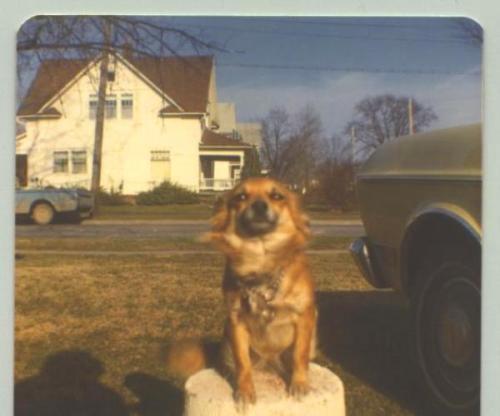 Pat, Dog, Pet, National Dog Day, Dog on Post