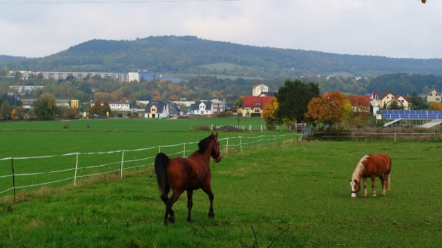 Horses, field, Germany, Jena, countryside