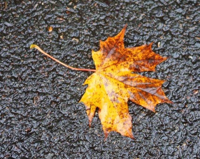 Leaves, Jena, Germany, Autumn, Fall, Fall Color, Sidewalk