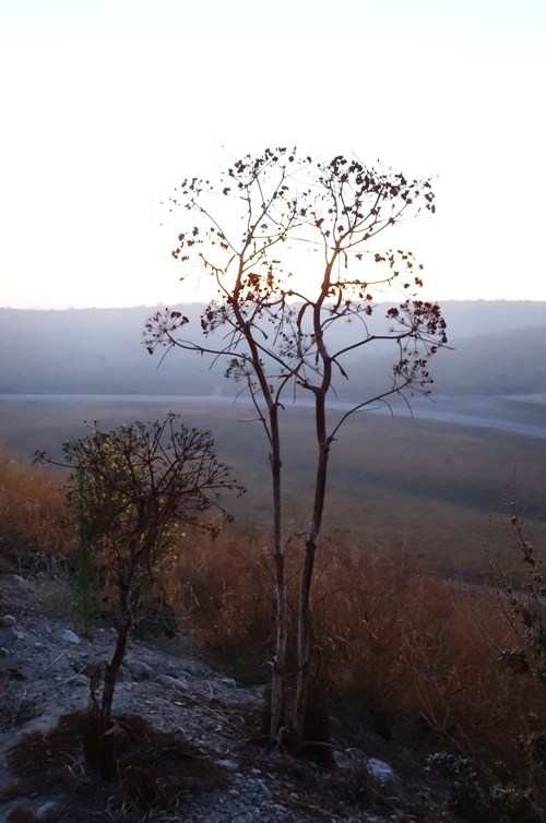 Plant at Tel Lachish, Silhouettes, Morning walk, Morning climb