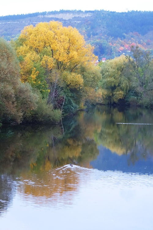 Jena, Germany, Saale River, Goschwitz, Fall Colors, Geese