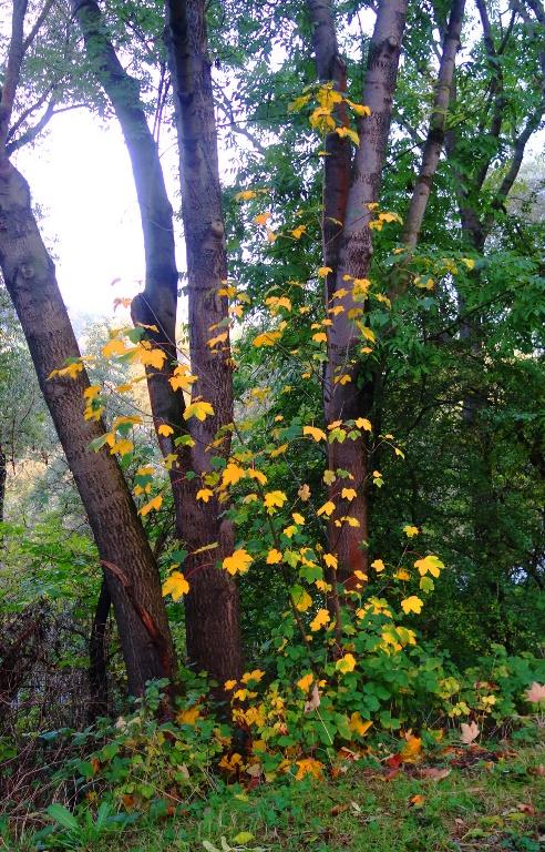 Trees, Jena, Yellow leaves, Rainy day, walk