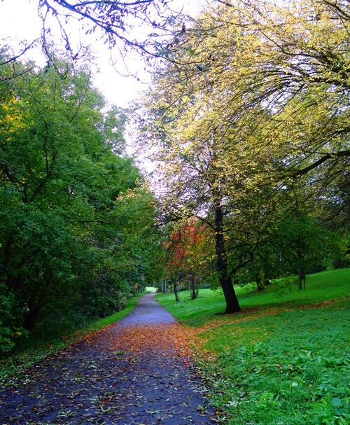 Walk to Work, Jena, Germany, Fall. leaves