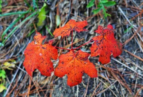 Germany, Jena, Hiking in the hills, Red Leaves
