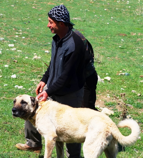 Shepherd with Dog, Turkey, Anatolia, Hattusha