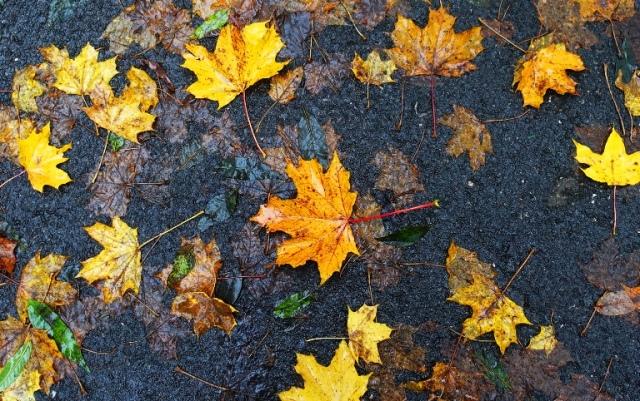 Trail, Wet Leaves, Side walk, walkway, fall colors, Germany