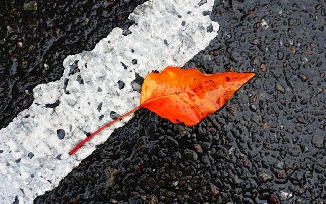 Leaves, leaf, red leaf, Parking lot, Wet Leaf, Fall