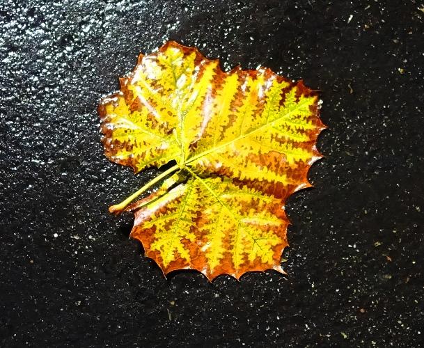 Wet Leaf, Parking Lot, Wet Weather, Rainy Day