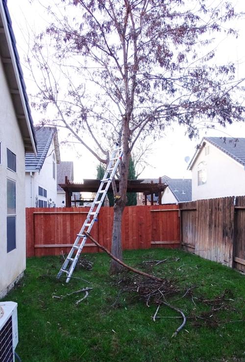 Tree Trimming, Yard Work