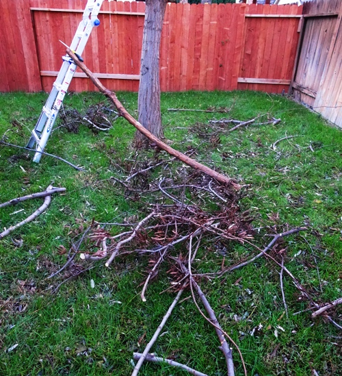 Tree trimming, yard waste, winter yard work