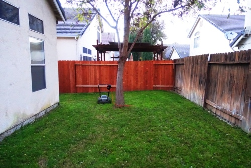 Winter mowing, back yard, mowed yard, electric mower