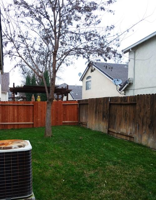 Green Grass, Backyard, Groundhog Day