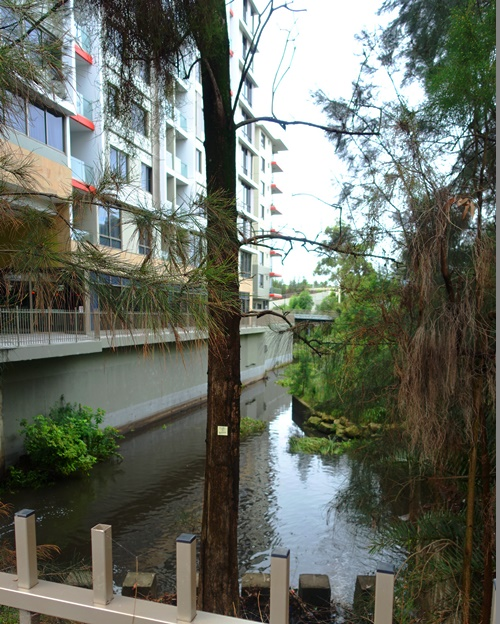 Shrimpton Creek, North Ryde, Australia, After the rain