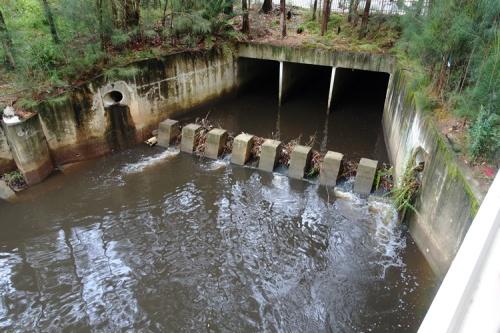 Creek after rain, North Ryde, Shrimpton Creek