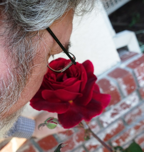 Stop and smell the roses, Mr. Lincoln Rose, Fragrant Roses, Red Roses