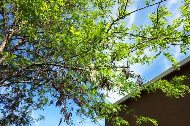 Spring Tree growth, tree trimming, Neighbor fence