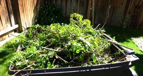Yard Waste, Tree Trimmings, Back Yard Work