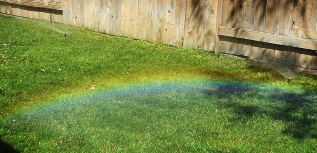 Backyard rainbow, sprinklers, spring yard work