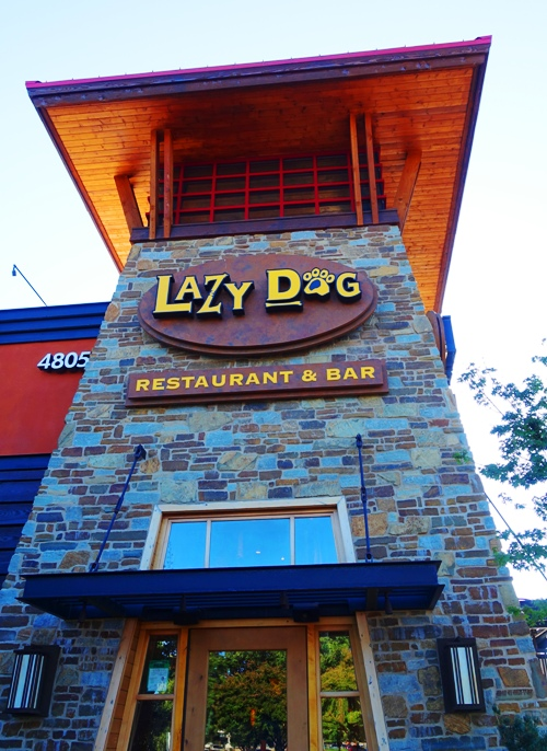 Lazy Dog, Dublin, California, Dinner, Dogs
