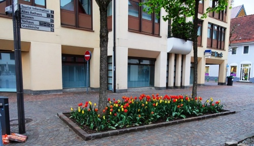 aalen germany, tulips, spring