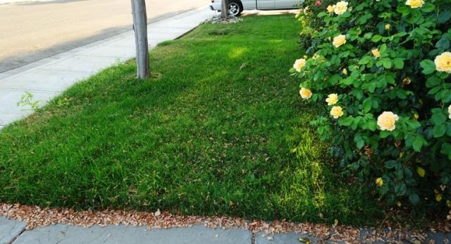 unmown yard, cooler weather, mowing yard