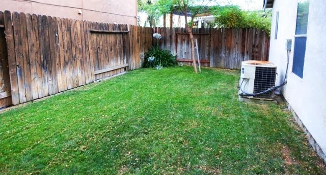 mown back yard, green grass, freshly mown