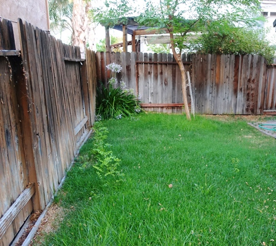 Need to mow, back yard, hot summer, volunteer trees