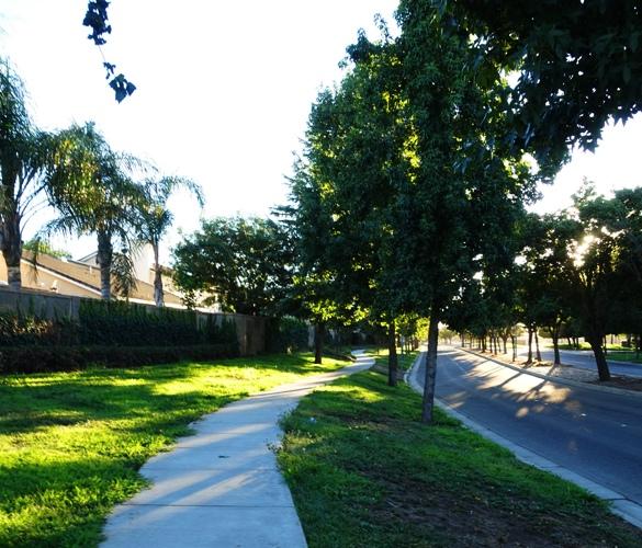 tree lined street, tracy, california, heat island reduction