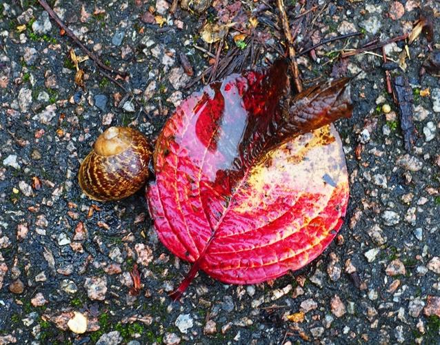 Snail and Leaf, walk, rainy day, wet walk