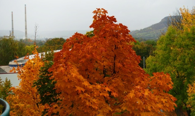 Autumn Color, Jena, Germany, Red Leaves