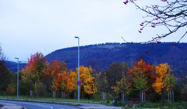 Colorful Trees, Goshwitz, Germany, Jena Germany