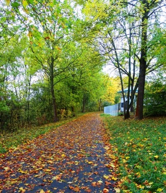 Walk to Work, Jena, Germany, Fall Color