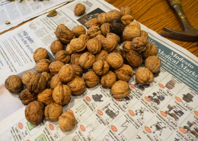 Walnuts, shelling walnuts, walnut orchard