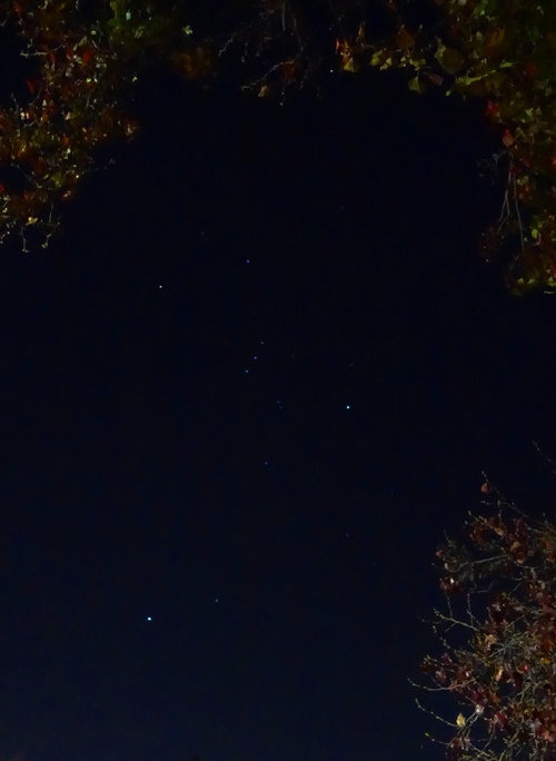 Orion, Constellations, Stars, Trees, Walk Home