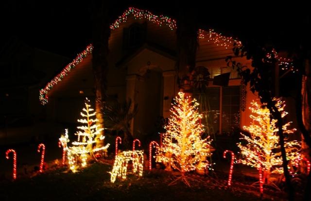 Winter Scene, Colorful lights, winter wonderland